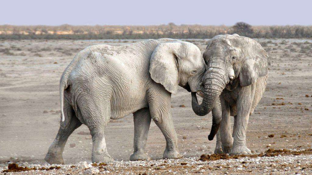 set boundaries and declare dominion, elephants