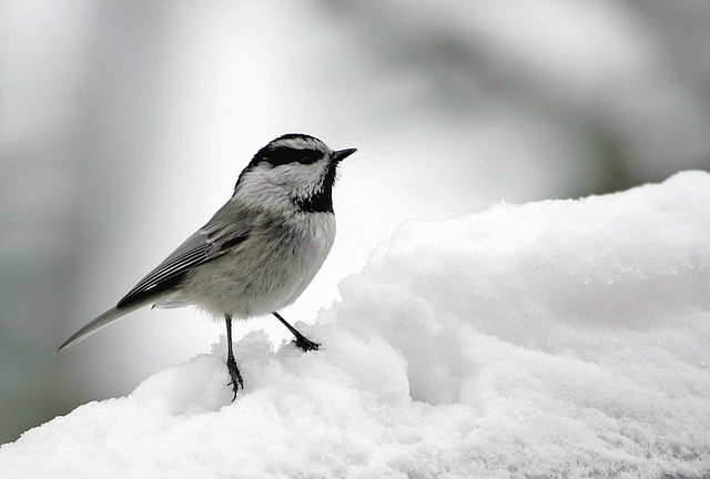 Walk the Beauty Way, bird in snow